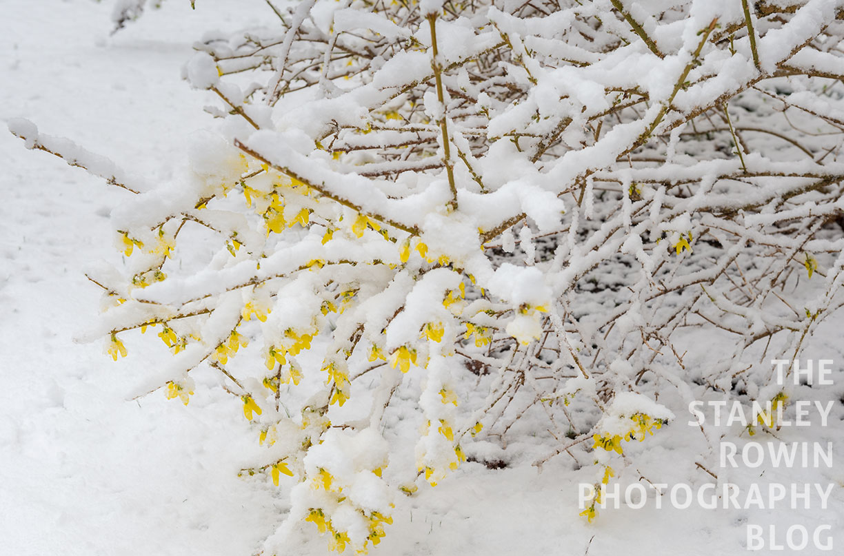 The Garden in the Spring, during snow storm