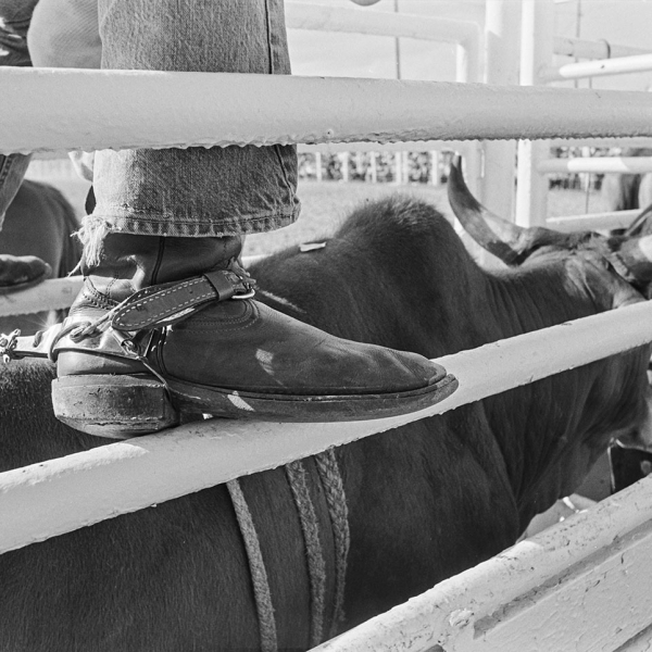 Cowboy Rodeo Rider