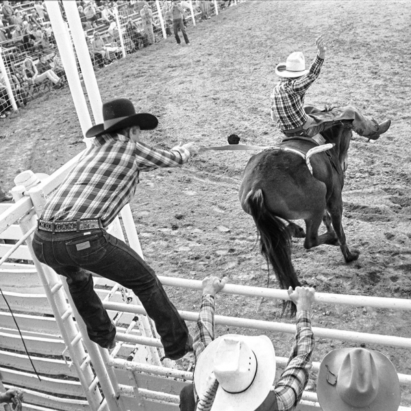 Rodeo where bulls rear end is pulled to make him buck and jump